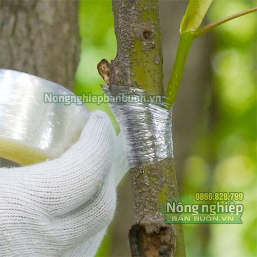 Băng keo ghép cây tự hủy khổ 8cm - G3