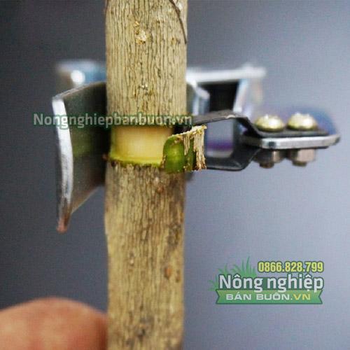 Kẹp khoanh vỏ cây chuyên dụng loại to - D64
