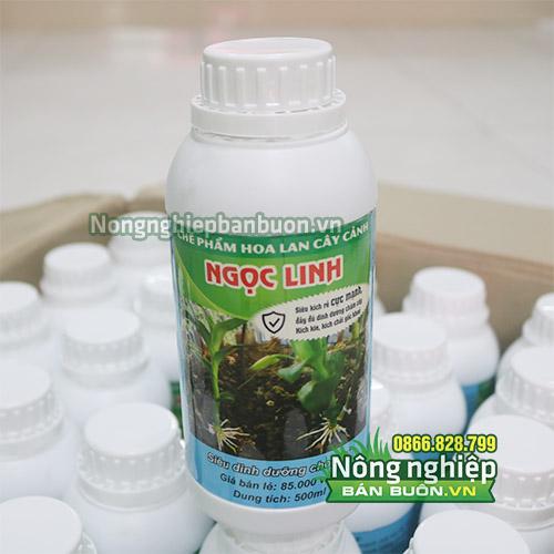 Thuốc kích rễ cho lan rừng Ngọc Linh - T115