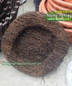 Dớn đĩa trồng lan (hình tròn) kích thước 20x20x5cm GT21