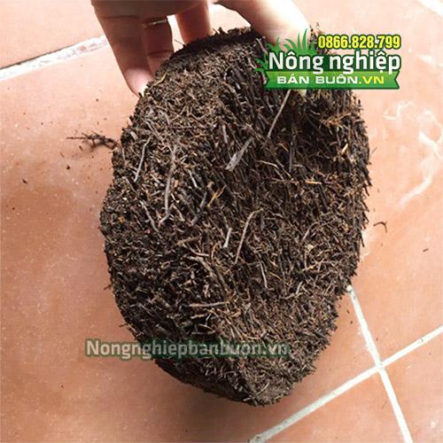 Phân phối dớn trồng lan (hình tròn) kích thước 20x20x5cm - GT21