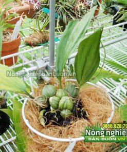 Giá thể xơ dừa trồng lan GT14