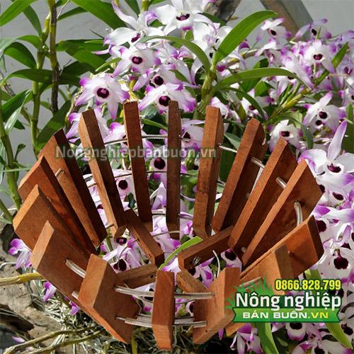 Chậu gỗ trồng lan phi 27cm CG02