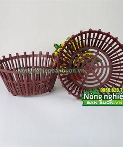 Chậu nhựa trồng cây phi 25cm CN07