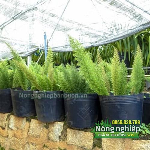 Địa chỉ bán bầu ươm cây kích thước 18x16- CH6