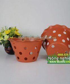 Chậu nhựa trồng cây miệng doe phi 21.5 CN20