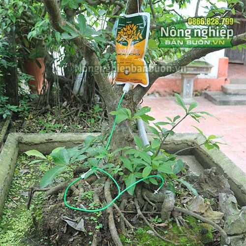 Thuốc truyền cho cây dạng dung dịch - T140
