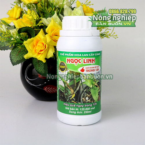 Thuốc chống thối nhũn cho lan Ngọc Linh 12h - T164