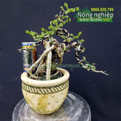 Dây nhôm uốn cây cảnh bonsai 3mm - D71